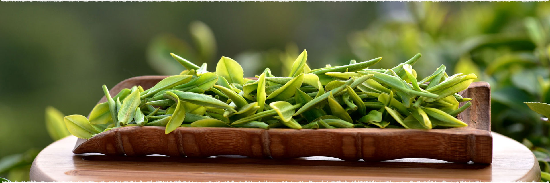 Brewing Chinese Top Grade Dragon Well Green Tea