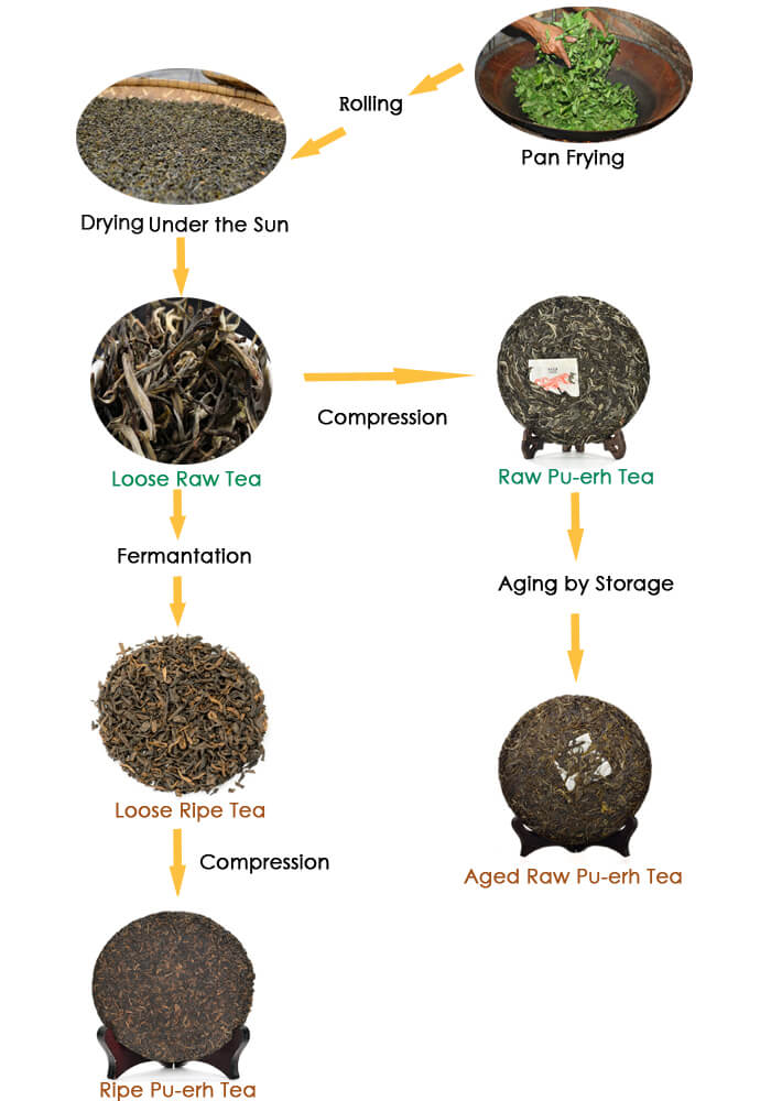 Athe Difference between Raw and Ripe Pu-erh