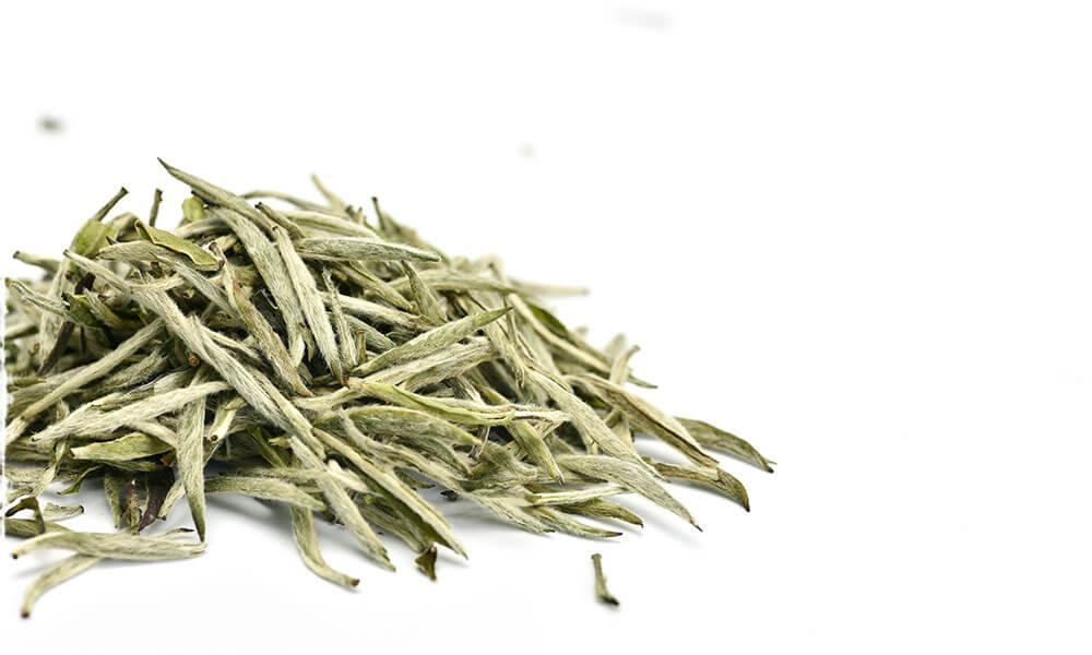 organic bai hao yin zhen silver needle white tea