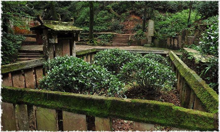 Huang Cha Tea Garden