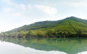 Bao Jia Cun Organic Tea Garden