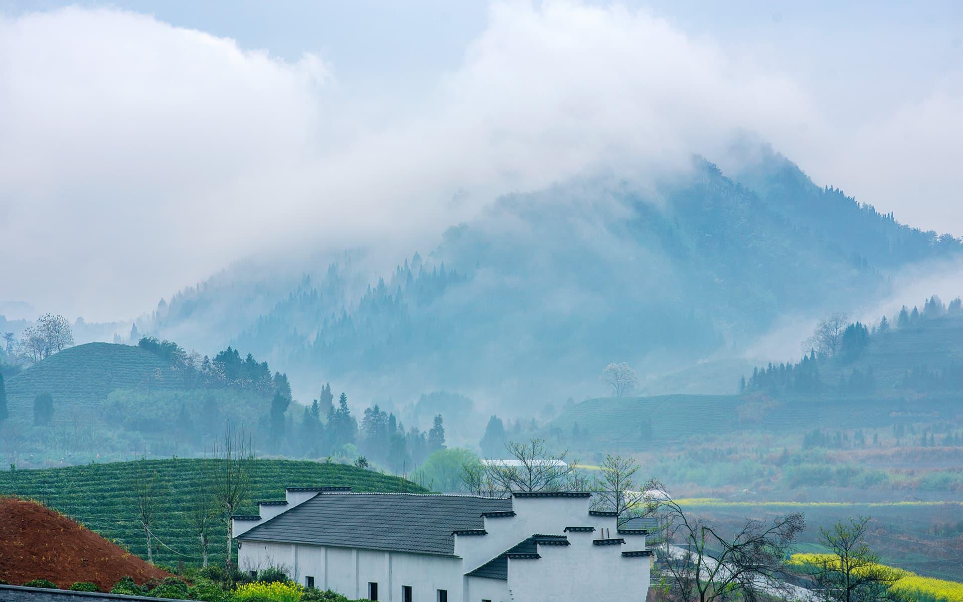 Qiandao Lake Organic Tea Garden