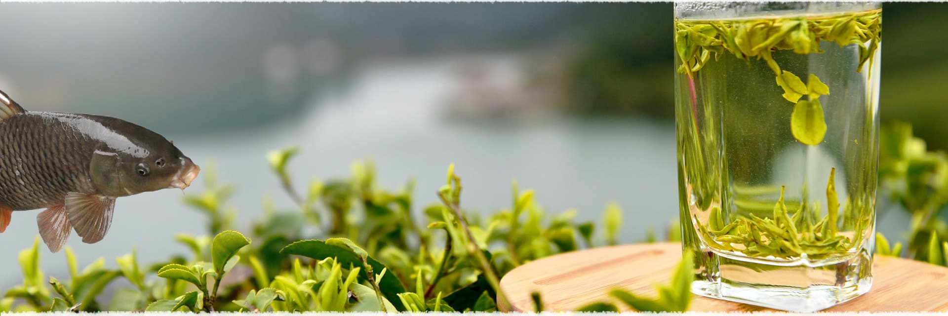 Stir Fish Fillets with Long Jing Leaves