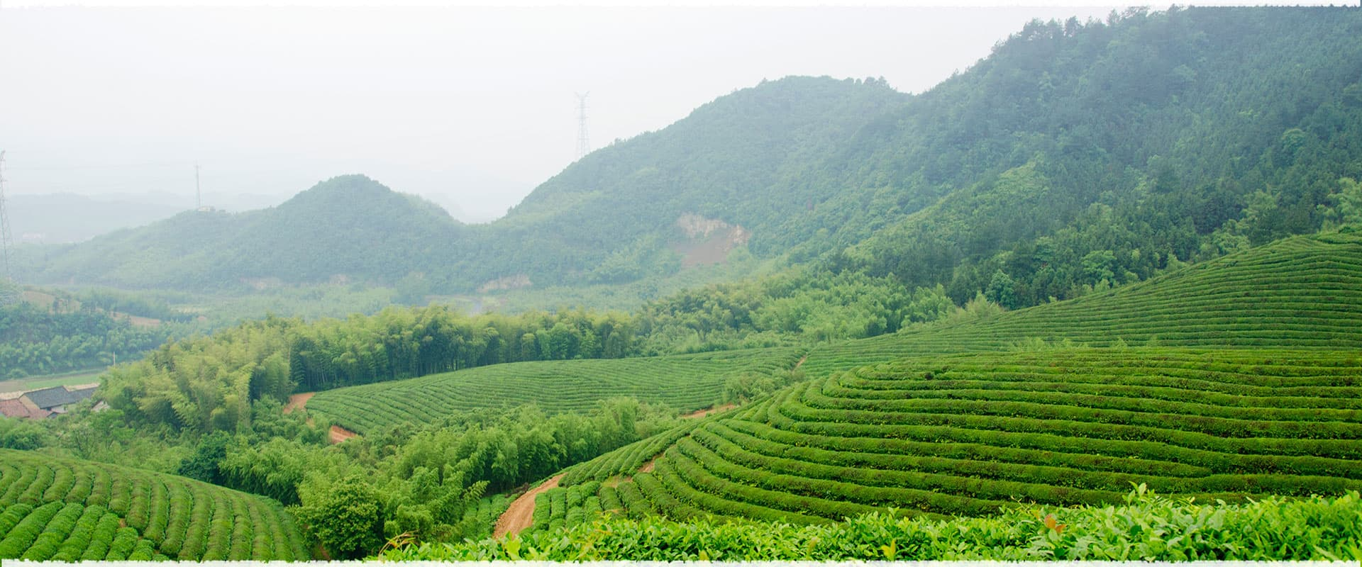 Travel to the  Organic Tea Garden in Lin'an