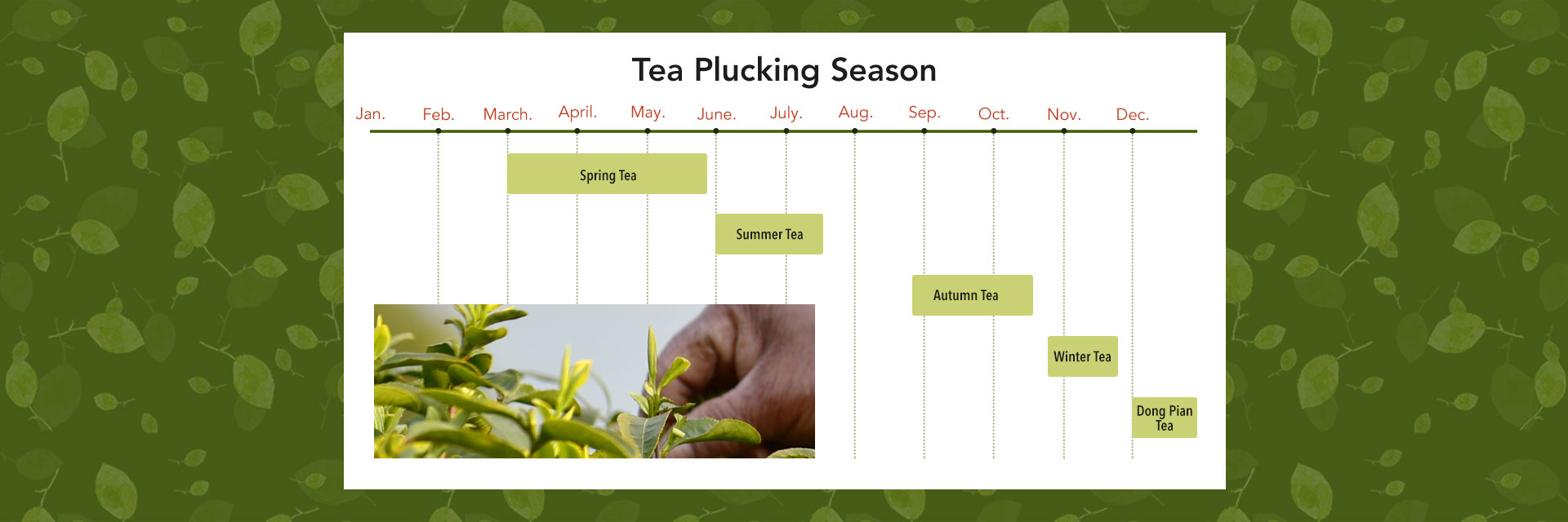 Comparing Spring Tea and Autumn Tea