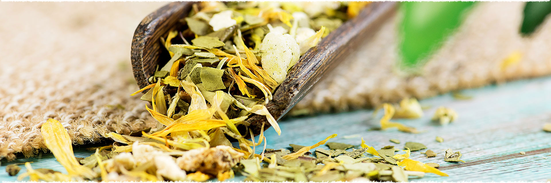 Yerba Mate Tea — the Past and the Present