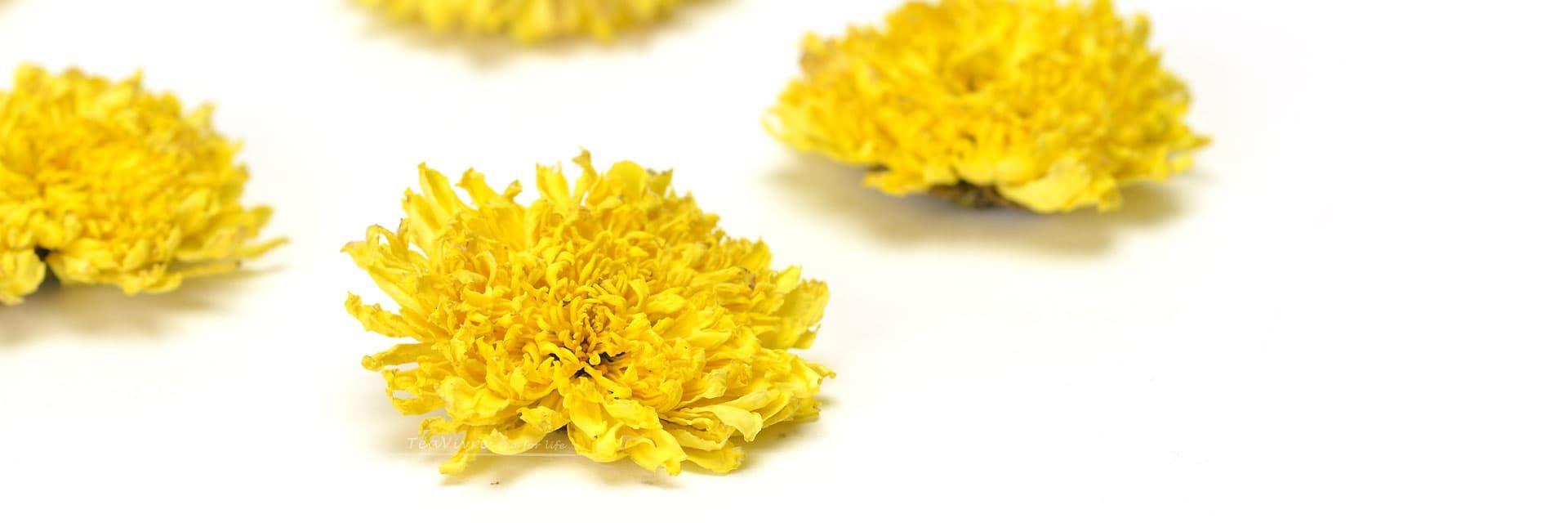 Huizhou Emperor Chrysanthemum Tea Teavivre